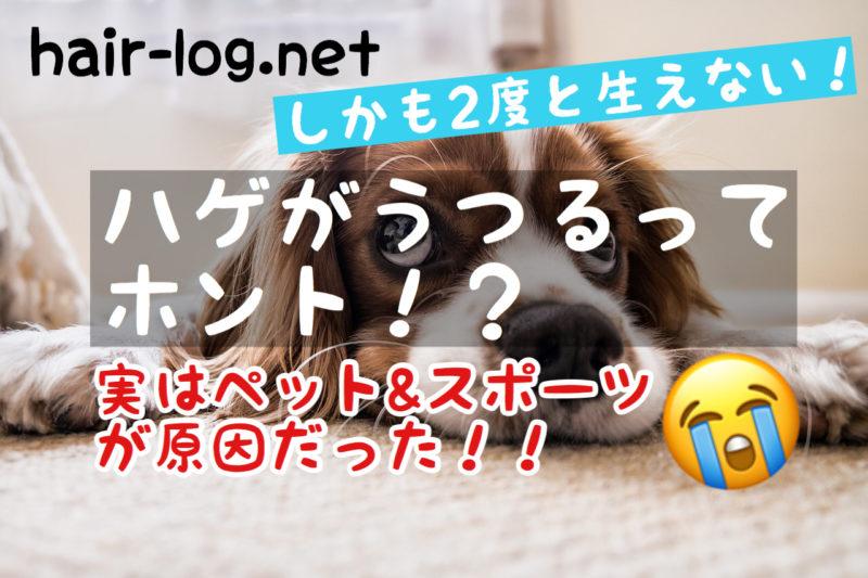 【植毛手術後108日目】え、ハゲがうつるってホント?実はペット&スポーツが原因だった!!